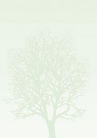 Фоновая бумага Drzewo 100 г/м2, 50 шт (распродажа)