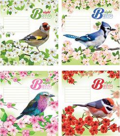 Тетрадь Мечты сбываются Птицы на ветках А5, 24 листа, клетка, ассорти