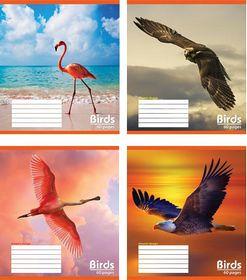 Тетрадь Мечты сбываются Птицы А5, 60 листов, клетка, ассорти